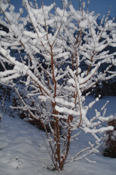 Sne i januar