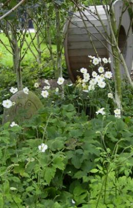 Hvide høstanemoner