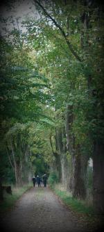 tirsbæk skov