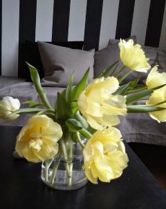 tulipaner i fuldt flor