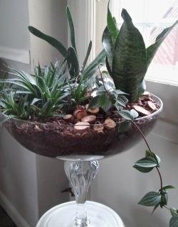 opsats af grønne planter