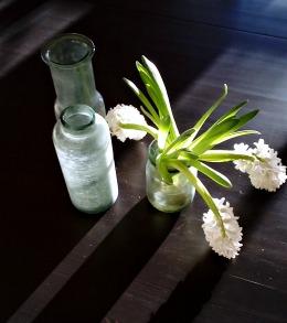 hyacinter der lever deres eget vilde liv