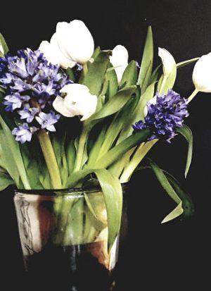 tulipaner og hyacinter i fuldt flor
